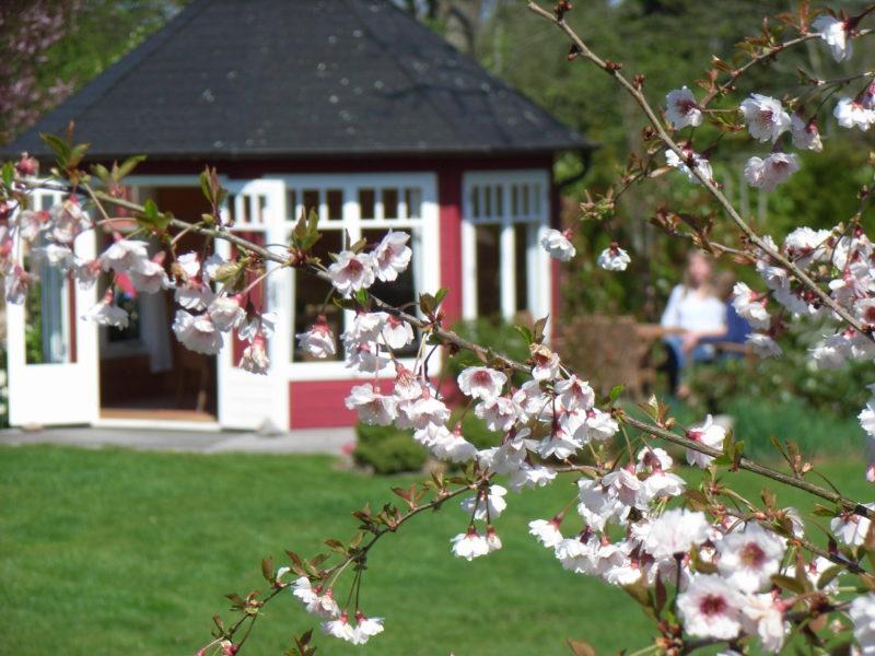 Kirschblüte Ferienhof Kähler